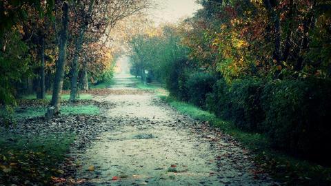 4K Wonderful Autumn Rural Road 3 stylized Live Action
