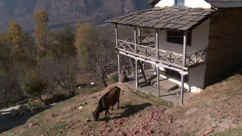 Indian Rural Scene. Kullu, Himachal Paradesh stock footage