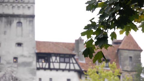 Leafy branch sways in front of an old castle 06 Footage
