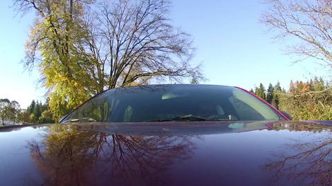Driving by Autumn Forest at Sunny Day Footage