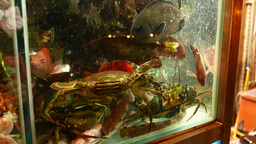 Aquarium full of sea inhabitants, show-window of seafood restaurant Footage