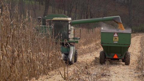 Scenes of harvesting corn Footage