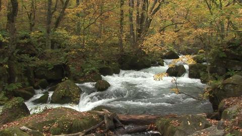 Mountain stream Stock Video Footage