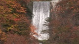 Waterfall and autumnal leaves Footage