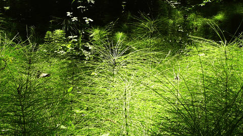 Beautiful Lush Plants with Playing Lights 01 Stock Video Footage