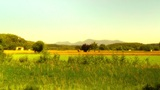 Beautiful Summer Countryside 05 stylized Footage