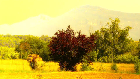 Beautiful Summer Countryside 07 stylized Stock Video Footage