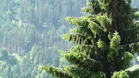 European Alps Austria 14 pine forest Stock Video Footage