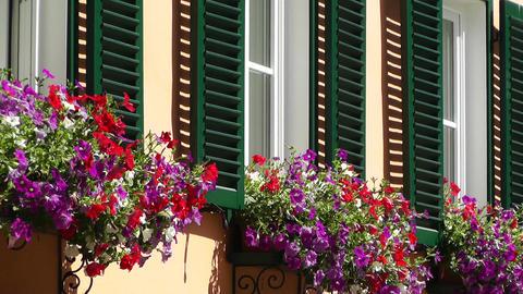 Geranium in Window Stock Video Footage