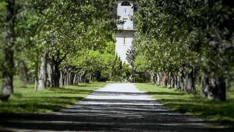 Romantic Nature Road with Trees 04 stylized Stock Video Footage