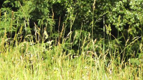 Summer Meadow 01 Stock Video Footage
