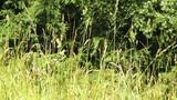 Summer Meadow 01 Footage