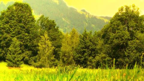 Summer Meadow 04 stylized Stock Video Footage
