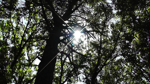 Sun Shines through Trees 01 Stock Video Footage
