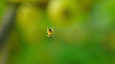 spider 5 Stock Video Footage