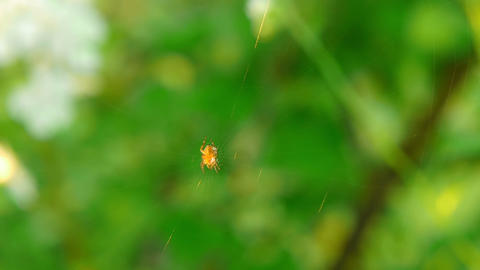 spider 7 Stock Video Footage