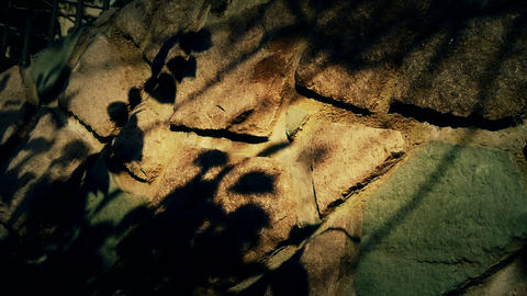 swing leaves silhouette shadow on stone wall Stock Video Footage