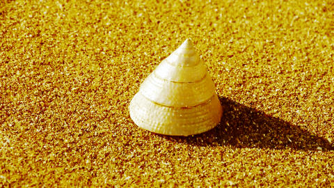 cone-shell on gold sandy beach,wind blow sand Stock Video Footage