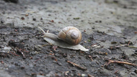 Snail crawling on the ground, time lapse Stock Video Footage