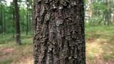 Tree trunk Footage