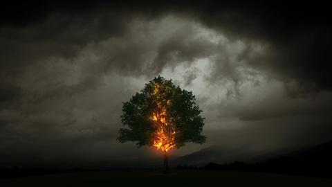 Lightning burns a tree Stock Video Footage