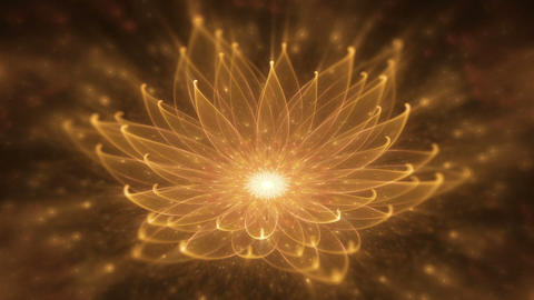 Radiant Orange Lotus, Water Lily, Enlightenment or Meditation and Universe, Magi Animation