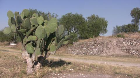 Cactus plant, Tula Footage