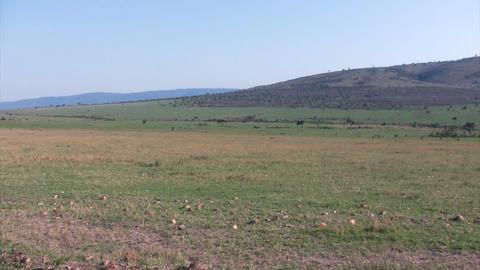Landscape, Masai Mara Live Action