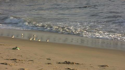 Seagulls on Newport Beach Footage
