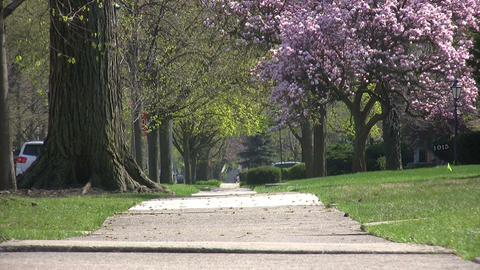 Trees In A Park, Chicago stock footage