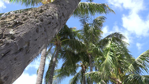 Palm Tree Footage
