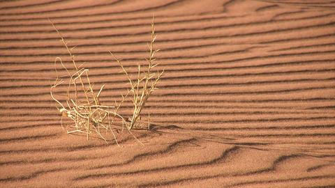 Namib Desert, Namibia ライブ動画