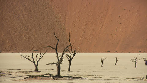 Dead Trees In Namib Desert, Namibia stock footage
