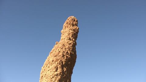 Anthill in Namib Desert Footage