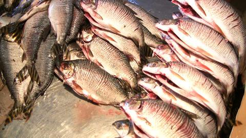 Dead Fish ビデオ