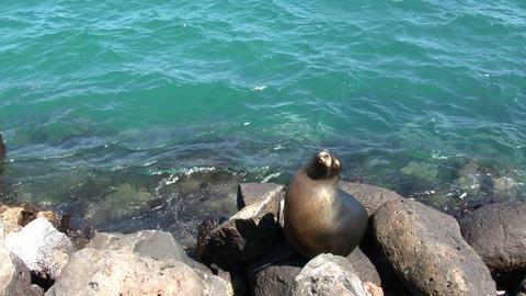 Galapagos Sea Lion ビデオ