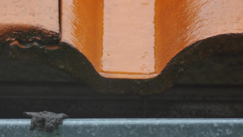 Water drops dripping from orange roof tiles 280 Footage