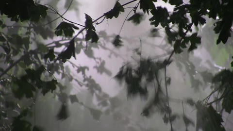 Heavy rain in the green forest 09 Footage