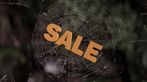 Spider web sale abstract Animation