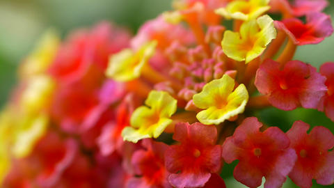 Spanish flower colorful macro close up GIF