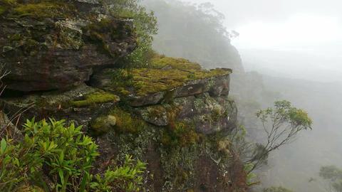 Misty Mountain Forest Fog Precipitation stock footage