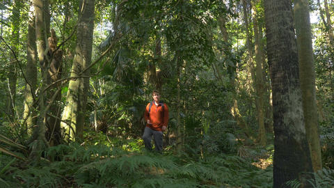 Man Hiking Walking In Jungle Rainforst using compass navigation orienteering Footage