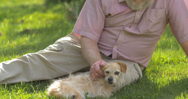 Grandfather retired elderly mature senior adult male in 60s retirement with dog Footage