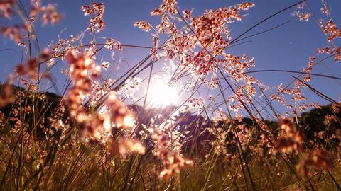 4K Warm Summer Sun Through Grass Footage
