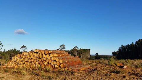 Deforestation, logging and the timber industry Live Action