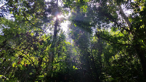 Tropical Rainforest Waterfall Thailand Footage
