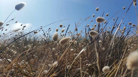 Grass moving in the breeze - Floral golden brown grass background Footage