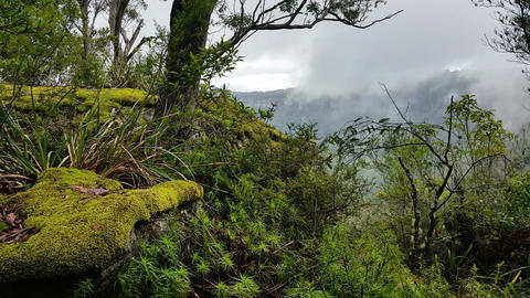 Fog rolling rainforest, Misty mountain forest fog precipitation Footage