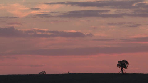 Country Tree Landscape sunset Footage