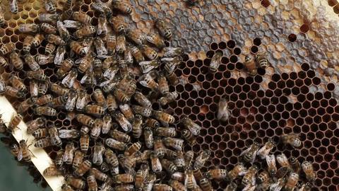 Honey bee macro footage of bee hive and honey production beekeeper Footage
